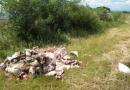 animalni otpad